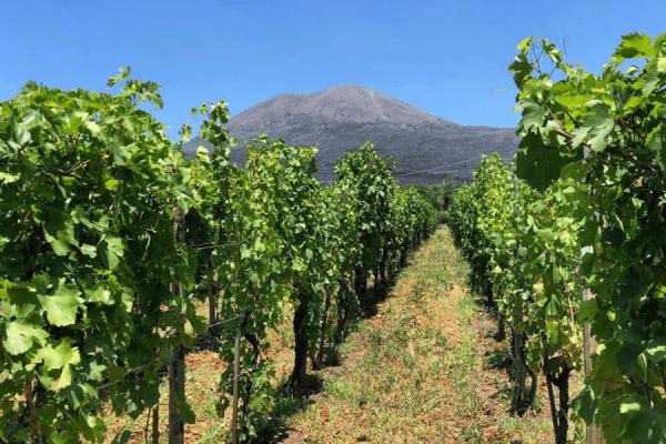 Wijn proeven aan de voet van de Vesuvius