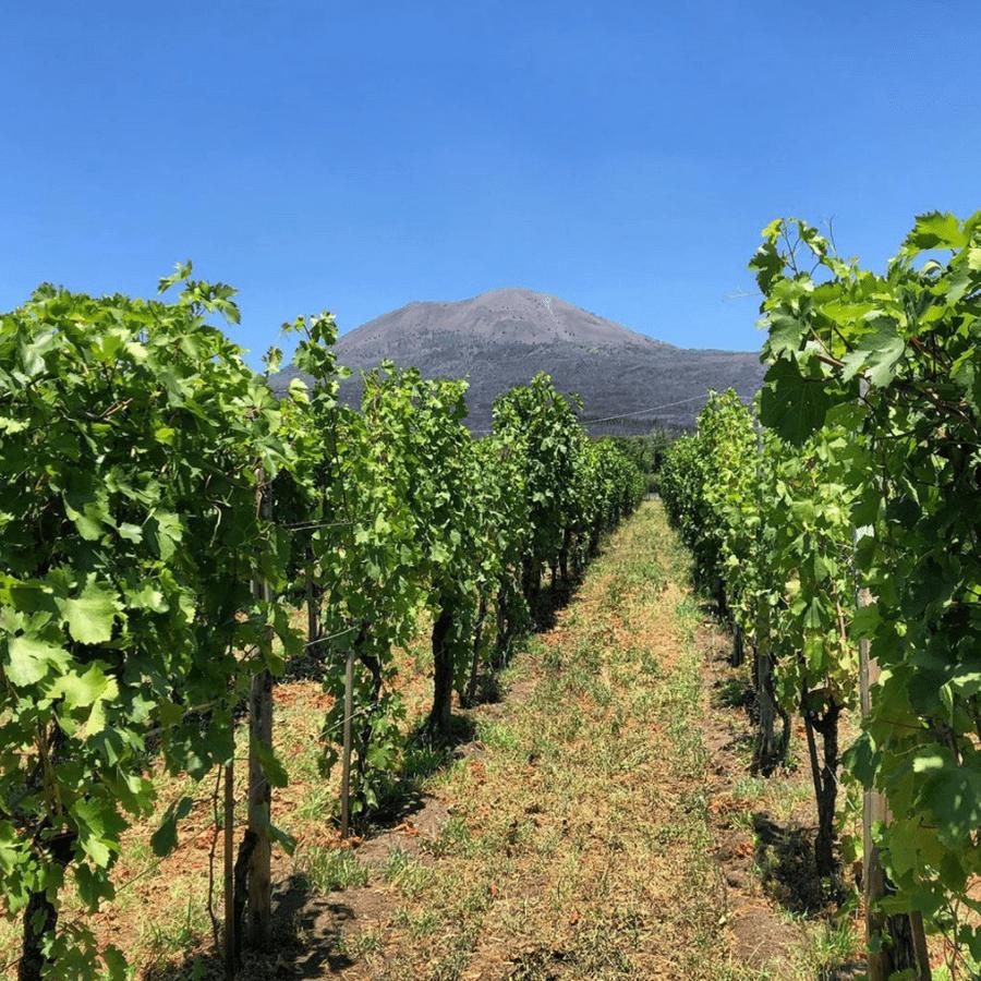 wijngaarden Napels